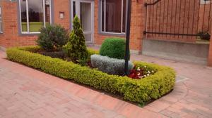 Venta de plantas de arandano bogot posot class for Vivero a domicilio