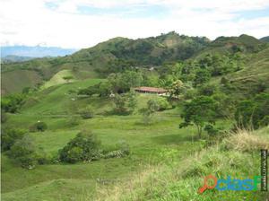 FINCA en Venta en sevilla, Valle del Cauca.