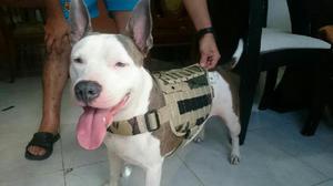 Venta de Chalecos para Perros - Popayán