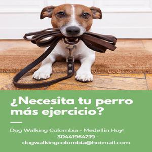 Paseo Perros a domicilio - Medellín