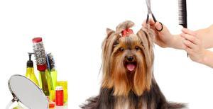 Se necesita peluquero canino - Sopó