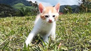 Hermosos Gatitos de 1 Mes, en Adopción - Cali