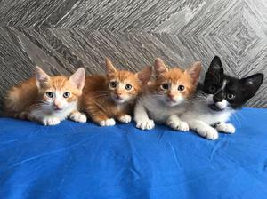 Hermosos Gatitos en Adopción - Cali