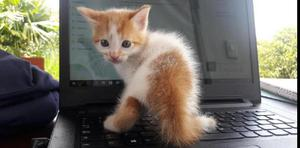 Preciosos Gatitos en Adopción Saludables - Cali