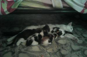 Lindos Gatitos en Adopcion Cali