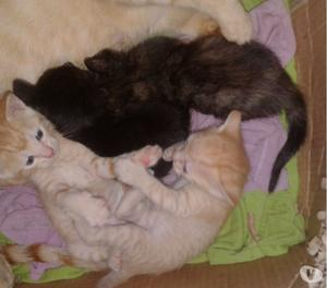 Hermos@s gatitos buscan hogar!