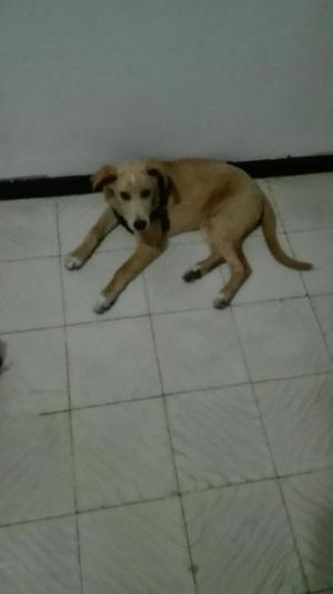 Se Da Cachorro de 4 Meses en Adopcion
