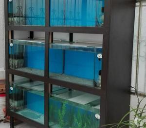 Vendo Torre con mueble de 6 acuarios, con riff independiente