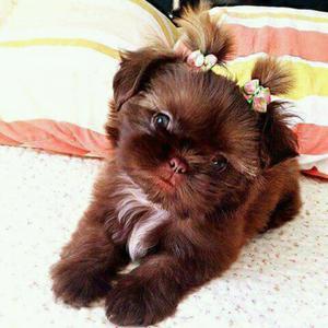 Quiero Adoptar Perrito de Raza Pequeña