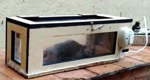 Trampas Eléctricas para Ratas Y Ratones