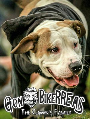 Perro para Montar