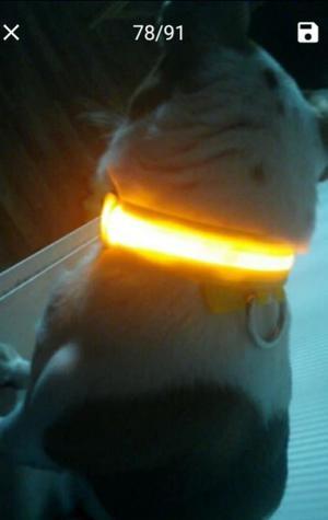 Collar Led para Perros Y Gatos
