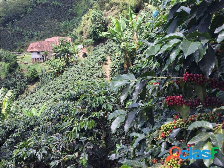 Se Vende Finca Cafetera En Santa Rosa De Cabal