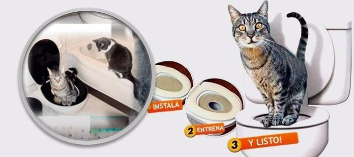 Baño Para Gatos Citi Kitty Kit Para Dejar Caja Arena Gatos