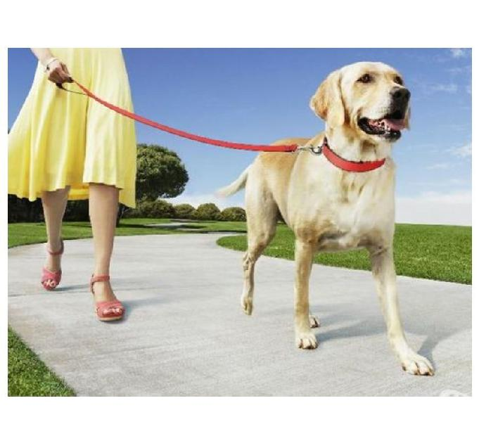 Servicio paseo y cuidado de mascotas La América y Laureles