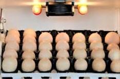 INCUBADORAS ARTESANALES Capacidad 200 huevos, también para