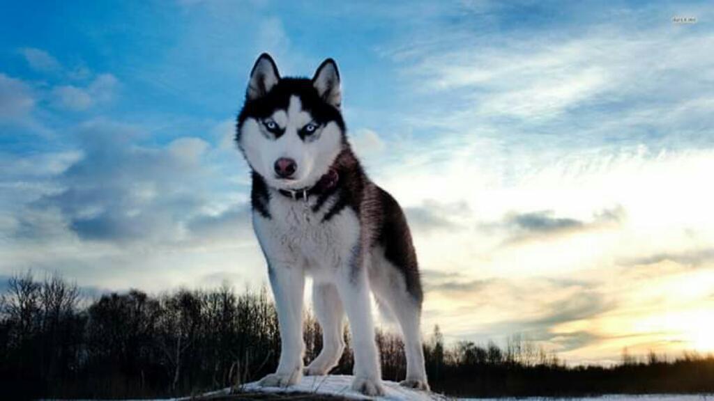 Se Ofrese Servicio de Guardería Canina