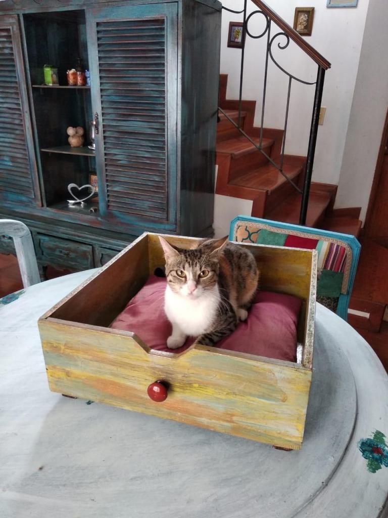 Camas para Gato. Estilo Antiguo / Vintage en Madera,