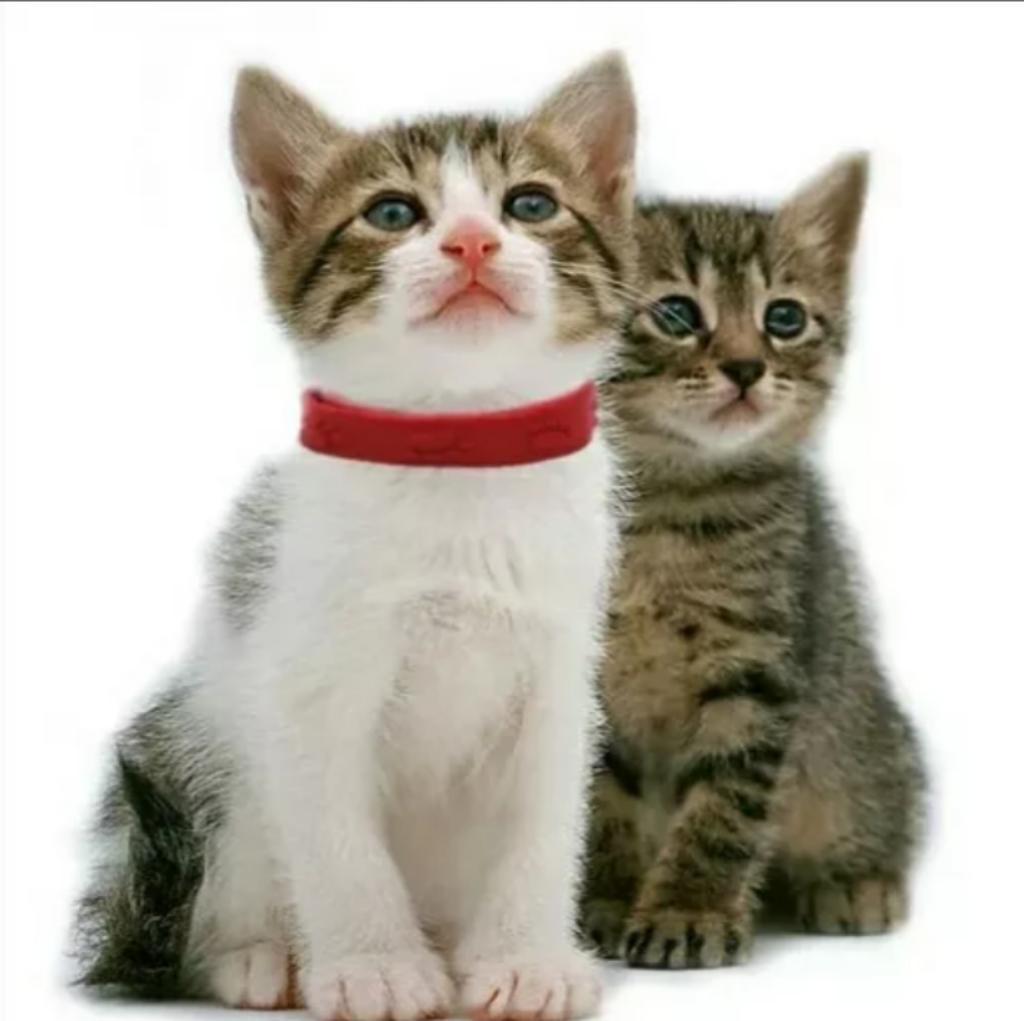 Collar Antipulgas Gato Perro Pequeños