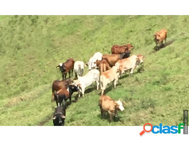 Vendo Finca ganado y cafe, apta canabis Antioquia