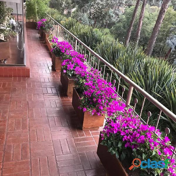 ALQUILER PLANTAS ORNAMENTALES PARA EVENTOS Bogotá Colombia
