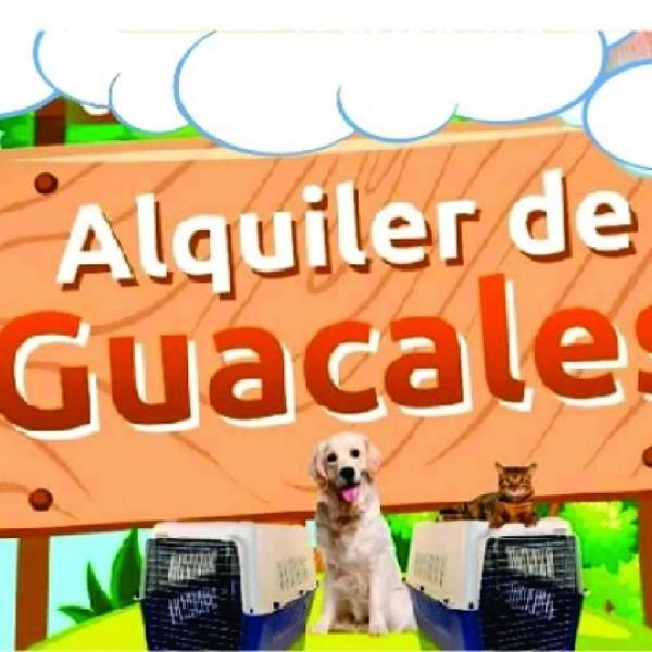 Alquiler de Guacales