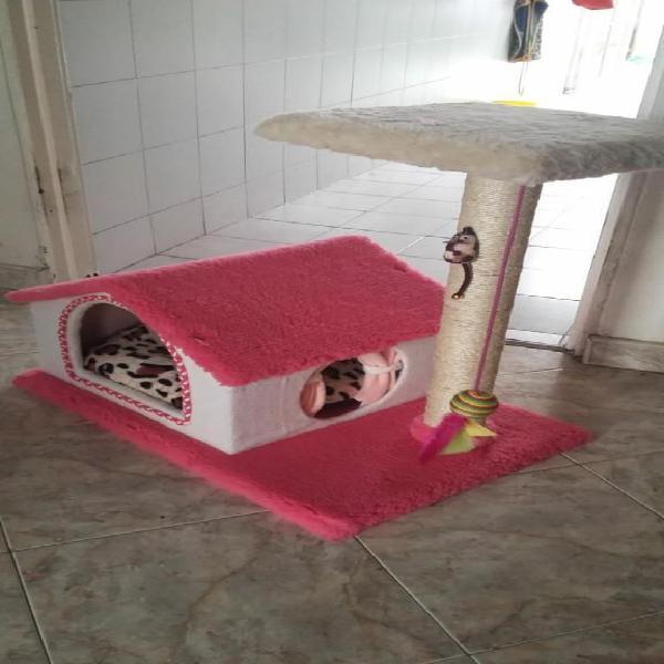 Gumnasio de Gato