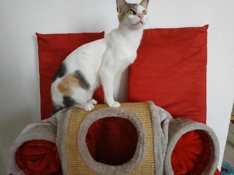 Tunel Y Cargador para Gato