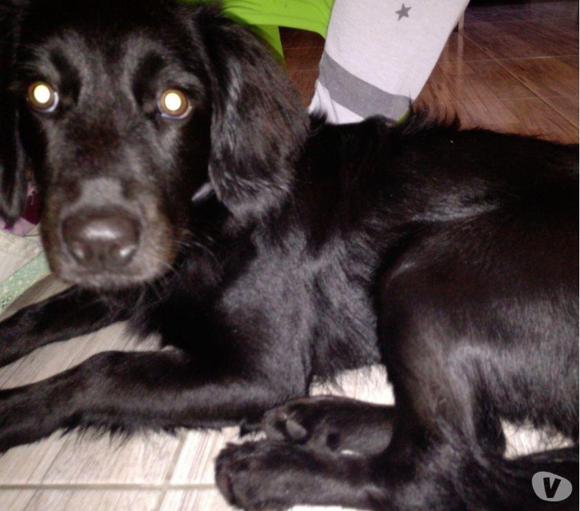 Doy en adopción una perra negra