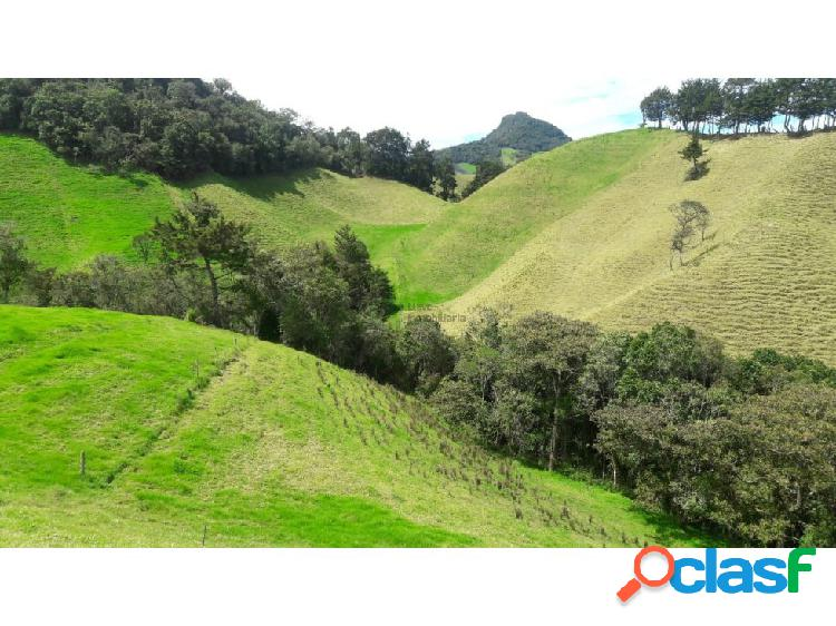 Finca agroindustrial en Venta La Ceja