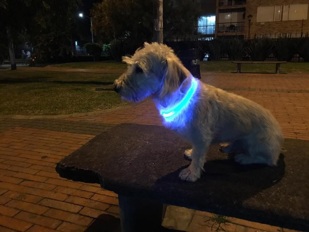 Collar luminoso para perro o gato