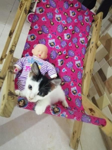 Doy en Adopción a Gatito