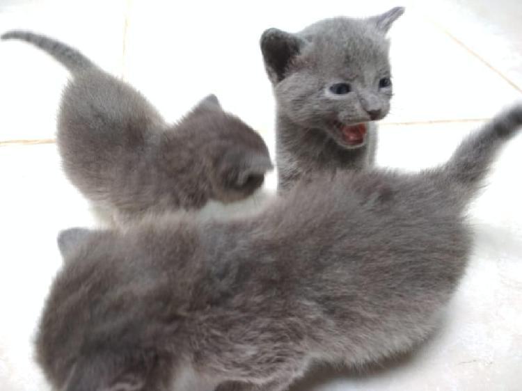 Adopta Un Lindo Gatito
