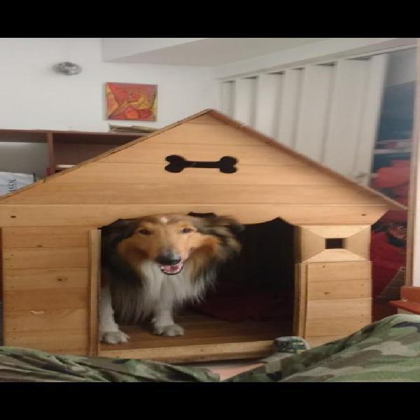 Casa para Perros Grande