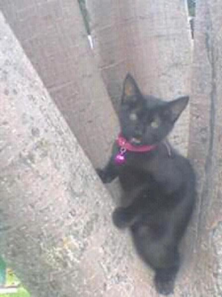 Quiero Adoptar Un Gato Bebe