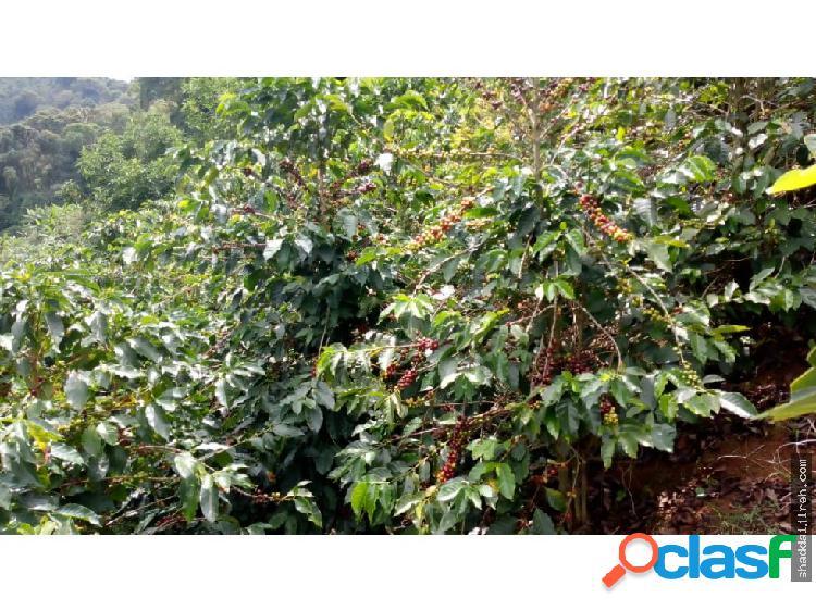 FINCA en VENTA en Caicedonia Valle del cauca
