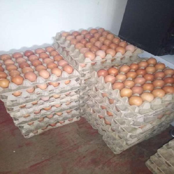 Se vende huevos de campo tambien hacimo domicilio esta muy