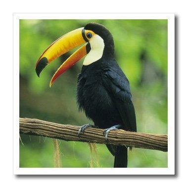 3drose Ht_85574_2 Toco Toucan, Tropical Bird, Iguacu Falls N
