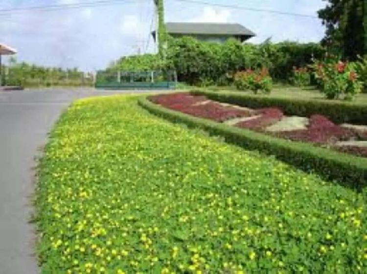 Venta e instalación de grama