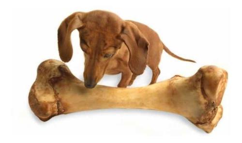 Hueso Para Perro Femur Cerdo Natural Snack